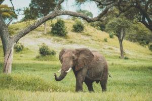 corfield camp tarangire elephant landscape