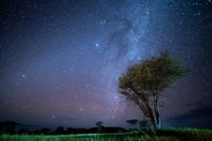 wayo walking camp serengeti stars