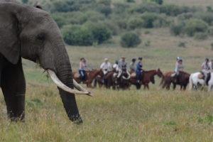 Horse Safari Elephant viewing 1