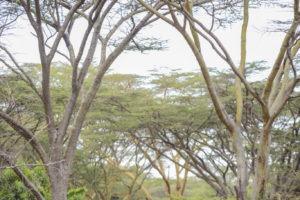 Horse Safari Life on safari