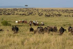 Horse Safari Miles of wildebeest