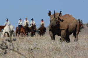 Horse Safari Viewing Black Rhino 1