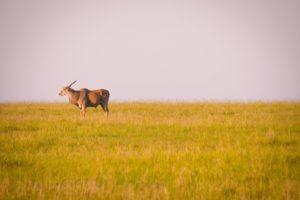 Masai Mara Kenya10