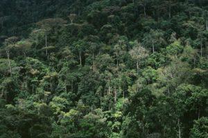 bwindi lodge uganda forest