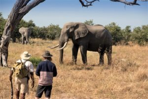 khwai tented camp botswana guests walking