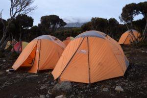 kilimanjaro climbing forest