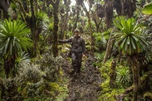 rwenzori trekking uganda forest 1