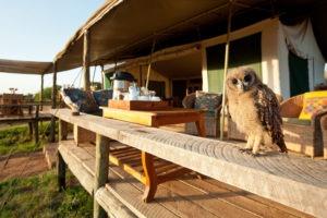 KEN 2018 5HOT Laikipia Camp Tea Deck with Owl