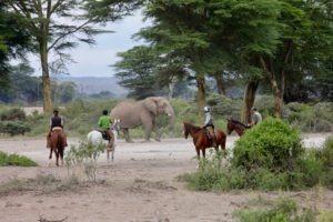 Pferdesafari Amboseli13