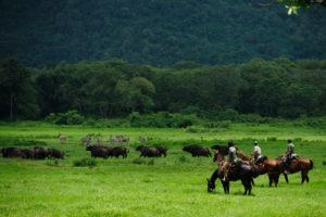 Pferdesafari Arusha Park