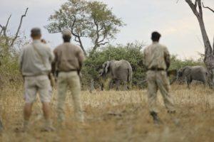 Lion Camp by Mantis Walking Safari Kopie