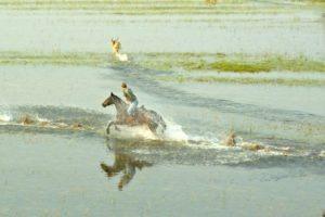 Okavango Delta Canter in Water 2