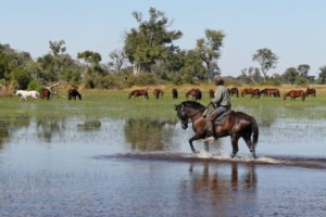 Okavango Delta Mamba and the herd