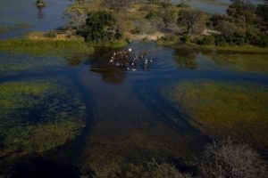Okavango Delta Ride 3