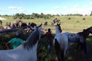 Ride Zimbabwe Elephants