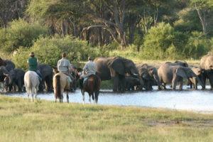 Ride Zimbabwe elephants 2