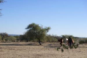 Riding Safari Namibia horses