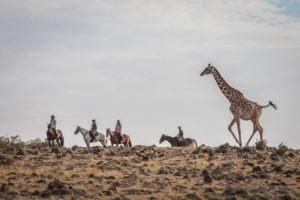 Horse Safari On the horizon