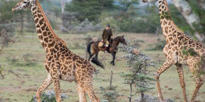 Horse Safari Passing by