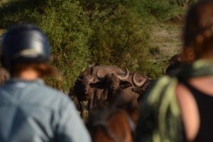 Kilimanjaro Elephant ride 106