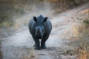 Lisa Blog Sambia SuedafrikaIMG 74515