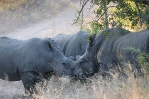 Lisa Blog Sambia SuedafrikaIMG 74656