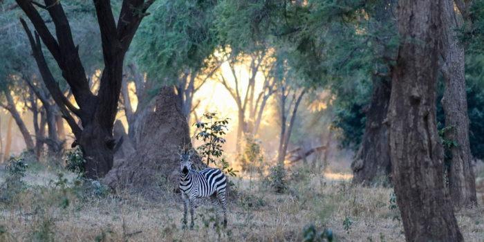 Lisa Blog Sambia SuedafrikaIMG 79899
