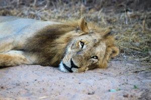 Lisa Blog Sambia SuedafrikaIMG 806811