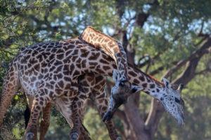 Lisa Blog Sambia SuedafrikaIMG 853216