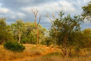 Lisa Blog Sambia SuedafrikaP103744218