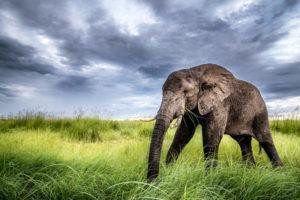 Pangolin Photo Safaris – BiF 07 800x600
