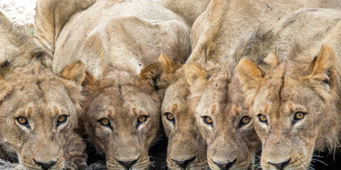 Pangolin Photo Safaris – BiF 08 800x600