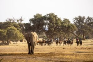 Cover picture Damara Elephant 1 1