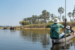 mokoro okavango botswana safari wild expedition