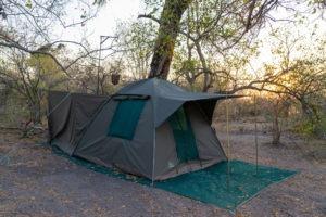 wild expedition safaris botswana walking safari