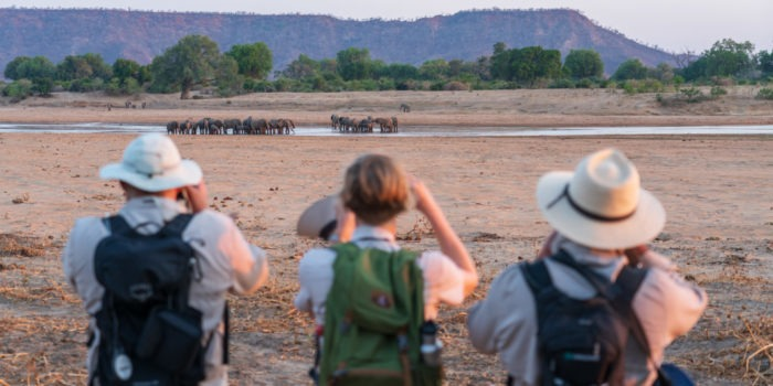 zimbabwe walking safari guests elephants gonarezhou