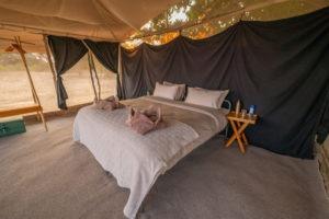 tusk and mane lower zambezi bed