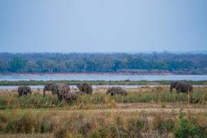 tusk and mane lower zambezi landscape