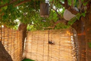 tusk and mane lower zambezi shower