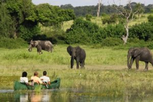 Chobe River Camp elephant viewing from boat