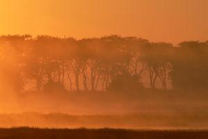 40 Sunrise on the Busanga plains