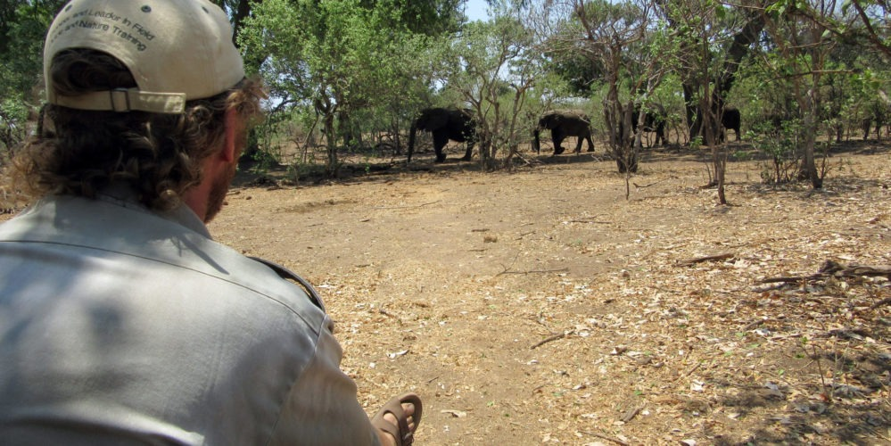 Being on foot with the big five