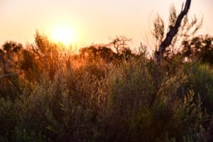 Botswana Kwapa Camp Sunrise plants