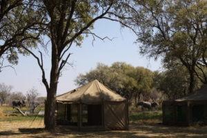 Botswana mobile safari elephants in camp Khwai
