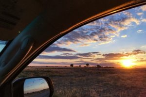 Botswana self drive safari game drives