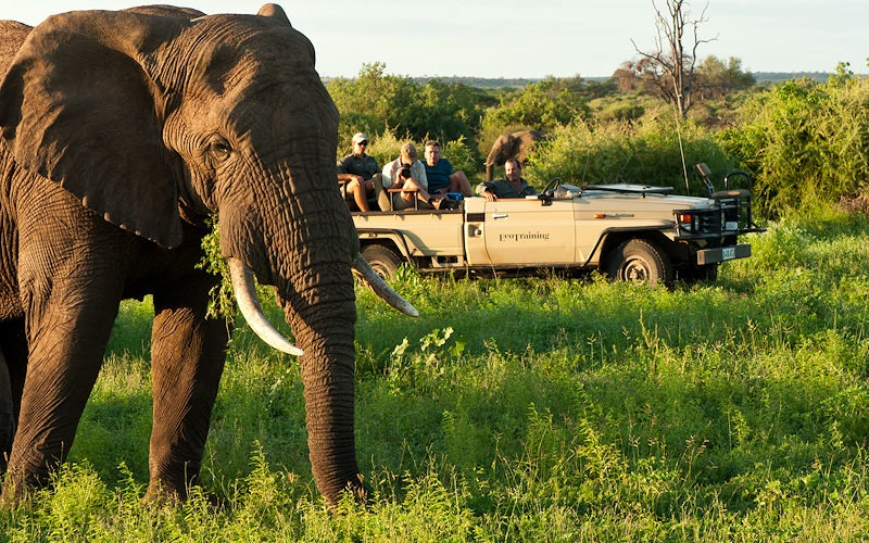 Ecotraining Elephant bull and vehicle