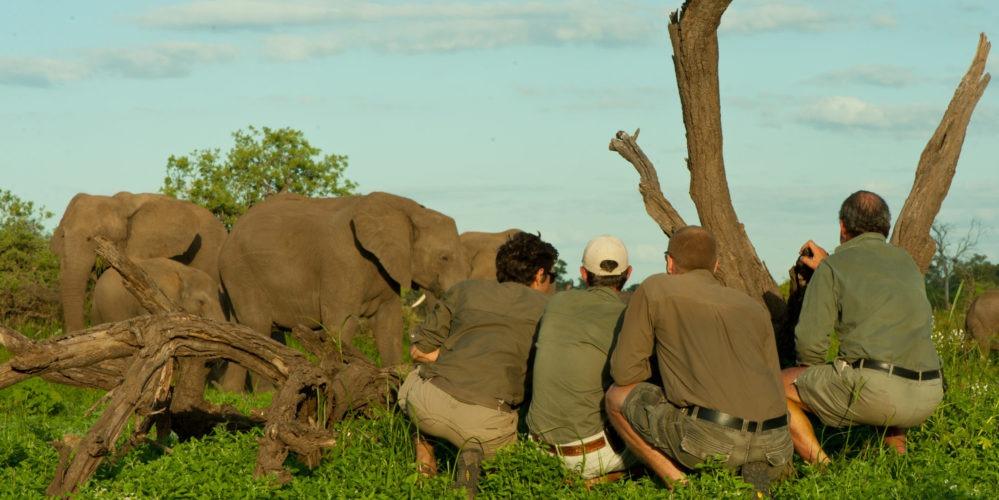 Ecotraining Elephant on foot 1