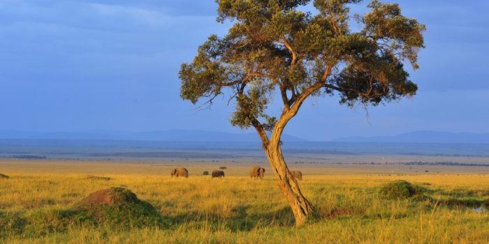Ecotraining Kenya Landscape