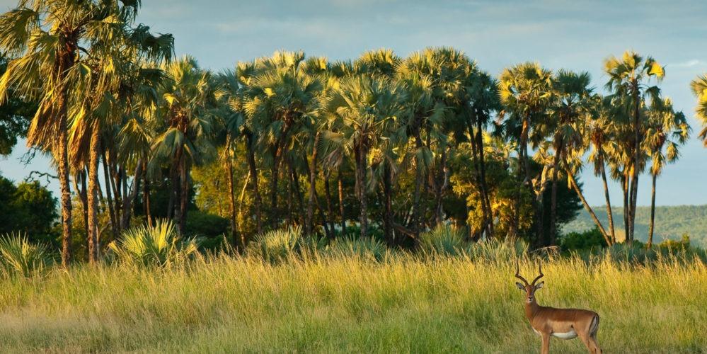 Ecotraining Makuleke landscape