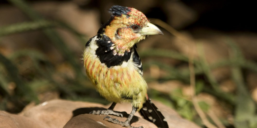 Ecotraining bird